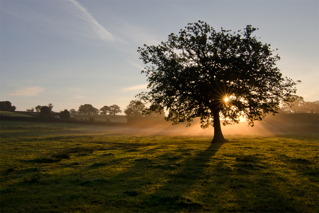An old oak tree in a Devon field, surrounded by mist and sunlight. Photograph by Kerrie Ann Gardner.