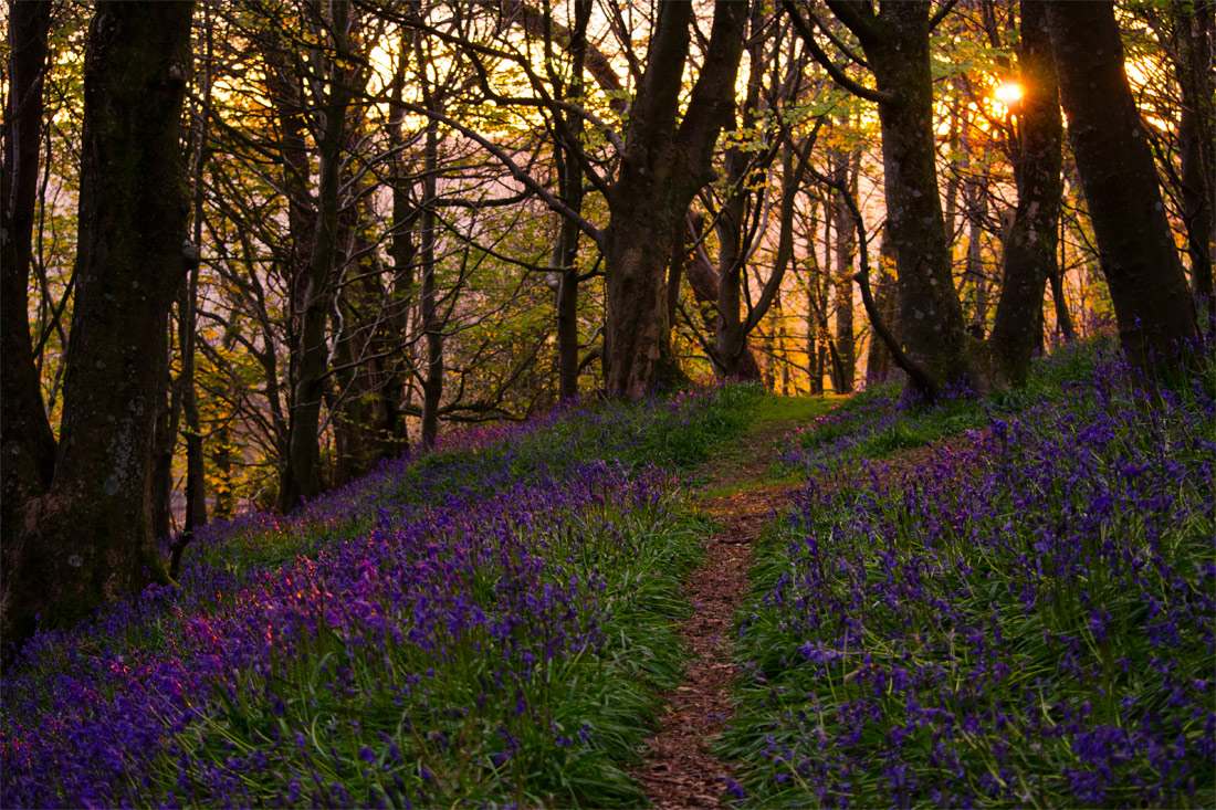 Sunset over Bluebells.