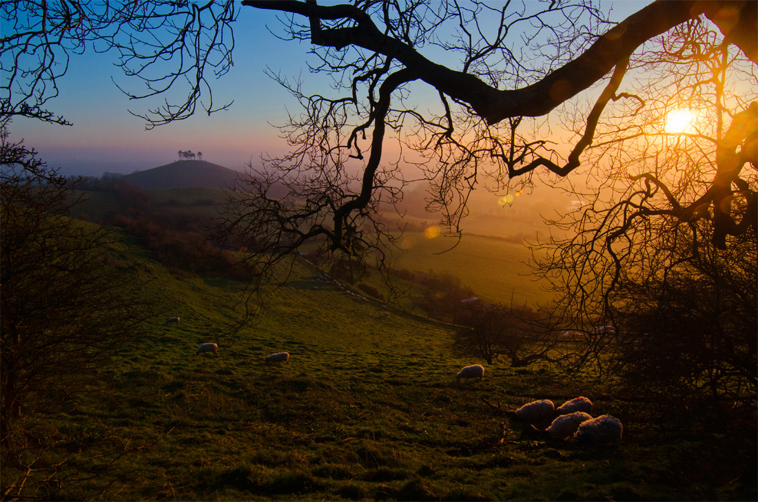 Colmer's Hill at Sunrise.
