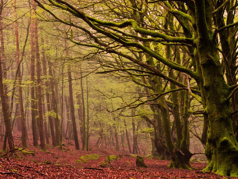 Lambert's Castle woods.