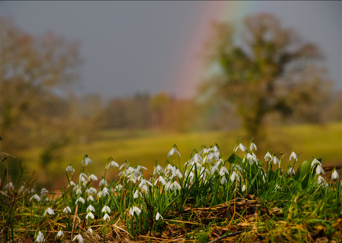 Snowdrops & a rainbow.