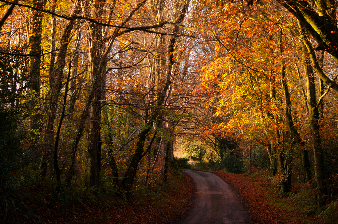 Autumn, Dorset
