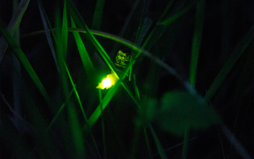 A Ghostly Green Light